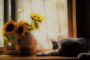 home comfort autumn window scene
