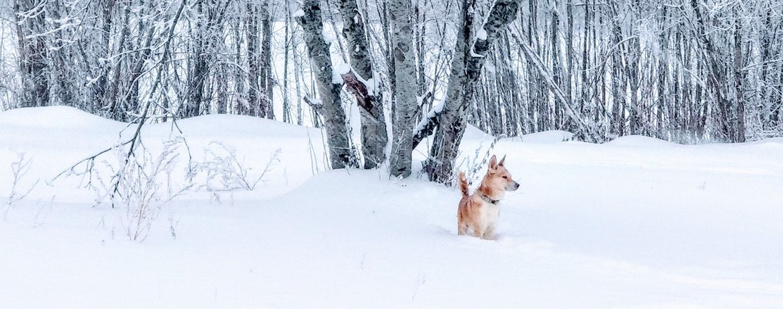 a dog standing in the snow outside